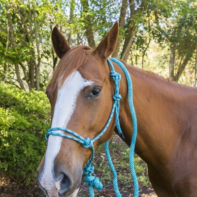 Lead Rope Pink And Light Blue Super Horse Saddlery