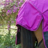 Fuchsia/Black Tail Flap