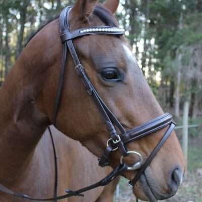Rochford Deluxe Bridle with Web Reins