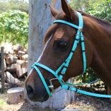 Mint PVC Bridle in Cob Size